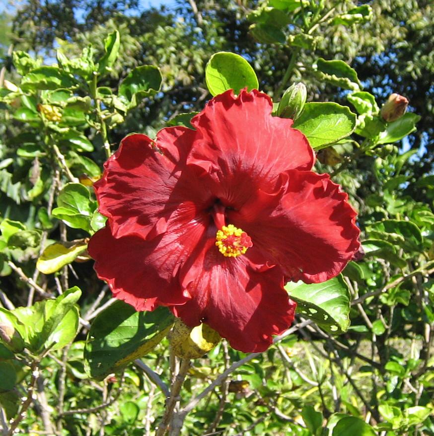 Flowers Big Island Hawaii