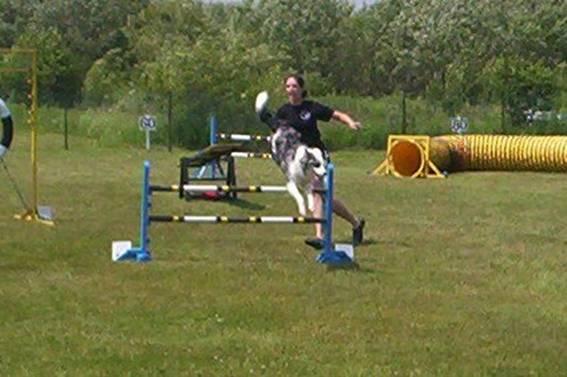 Dog Agility Training Ottawa