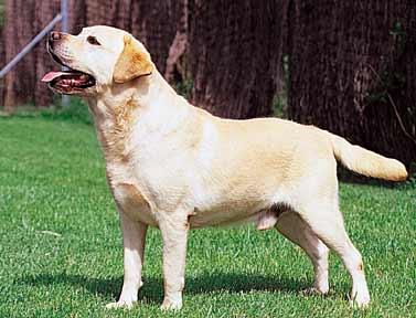 Regalo perro raza pequeña