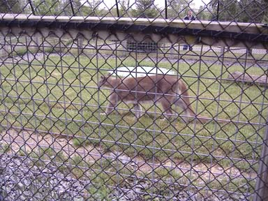 scotia cougars personals Things to see and do in nova scotia  the park shelters moose, bears, cougars, coyotes and bald eagles (of which it has a particularly high population) .