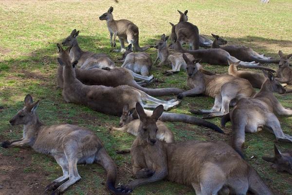 animals to groups